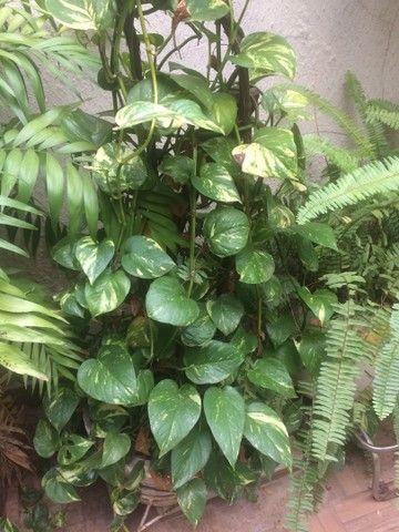 Plantas lindas  - Foto 5