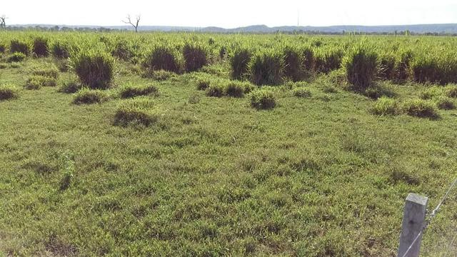 Fazenda 1.000 Hectares Grande Oportunidade - Itiquira - MT - Foto 8