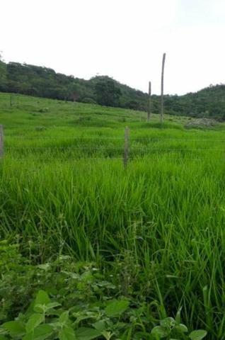 Oportunidade Fazenda Vale Do Prata - Foto 7