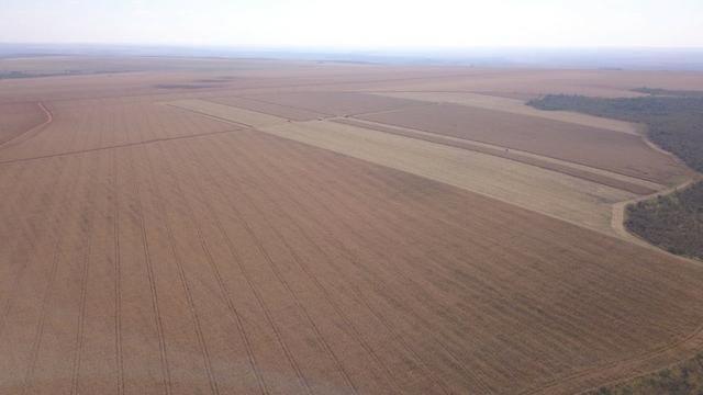 Fazenda 1.150 Hectares Plantando Lavoura - Nova Mutum - MT - Foto 2