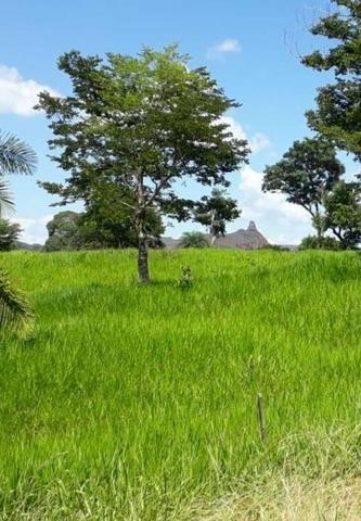 Oportunidade Fazenda Vale Do Prata - Foto 8