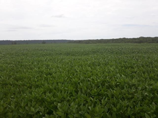 Fazenda 1.020 Hectares Plantando Lavoura - MT - Foto 2