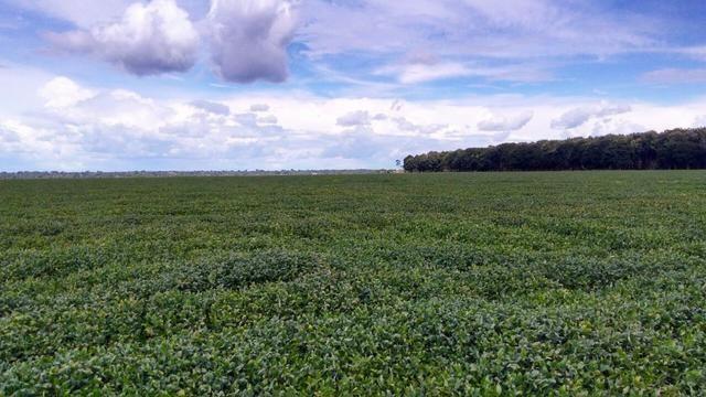Fazenda 663 Hectares Plantando Lavoura - MT