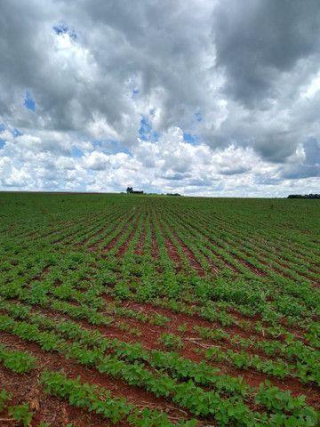 Arrendamento Fazendas PR Ms e Mt