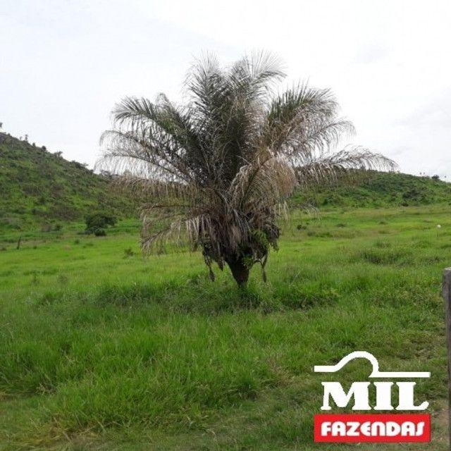 Fazenda de 320 alqueires (1550 hectares) em Vila Rica - MT - Foto 3
