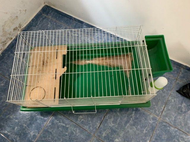 Gaiola - Grande para pets - Foto 2