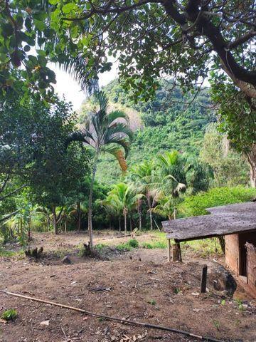 Terreno em São João do Jaboti - Espírito Santo - Foto 5