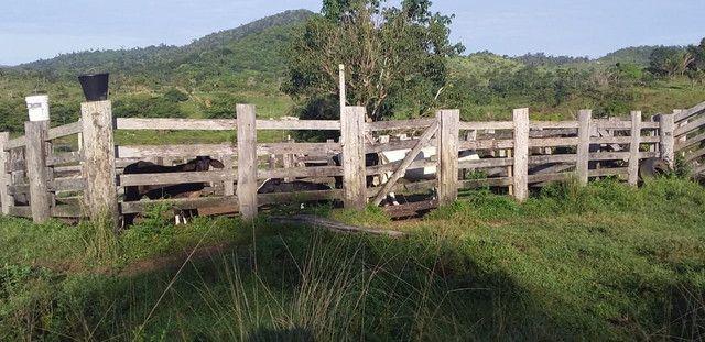 Fazenda 8 Alqueires - Foto 3