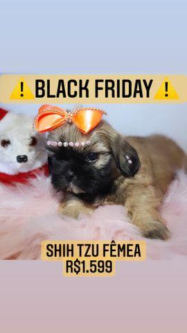 Black friday!! Shih Tzu fêmea lindíssima R$1.599 - Foto 3