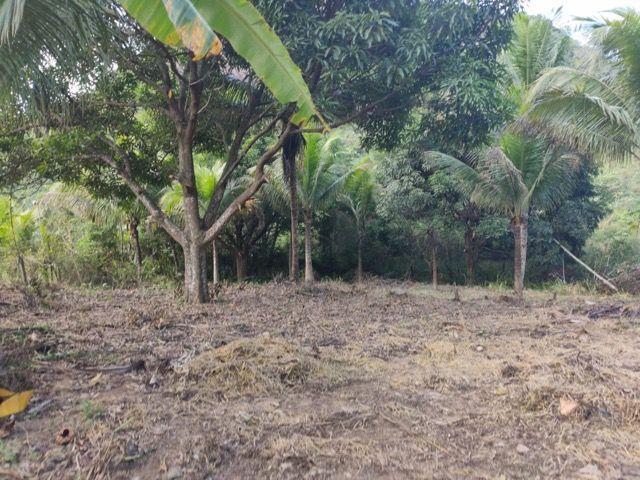 Terreno em São João do Jaboti - Espírito Santo - Foto 7