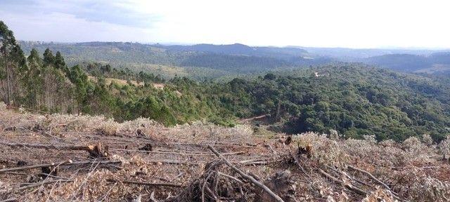 V terreno de 1000m2 - Foto 2