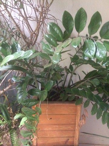 Plantas lindas  - Foto 3