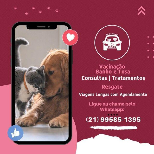 Transporte pets - Foto 2