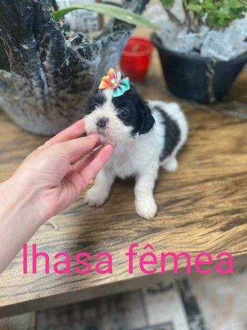 Lhasa disponível