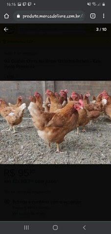 Vendo galinhas  - Foto 3