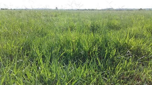 Fazenda 1.000 Hectares Grande Oportunidade - Itiquira - MT