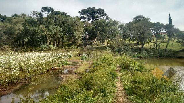 Chácara à venda em Zona rural, Contenda cod:219-16 - Foto 3