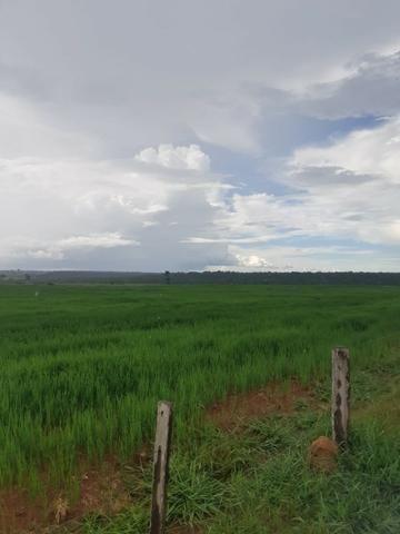 Fazenda 1.210 Hectares Para Lavoura - Colider - MT