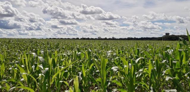 Fazenda 1.700 Hectares Plantando Lavoura - Tapurah - MT