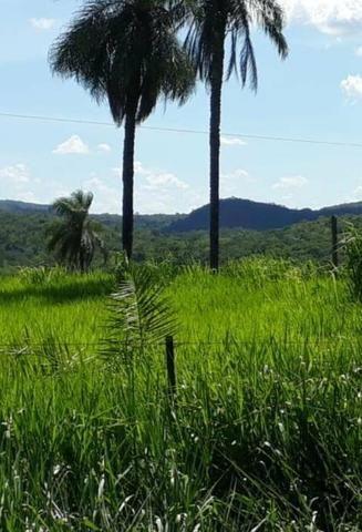 Oportunidade Fazenda Vale Do Prata - Foto 6