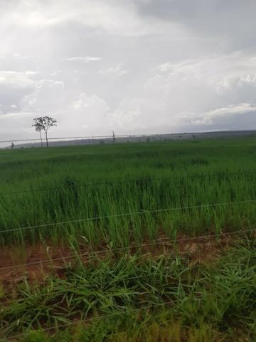 Fazenda 1.210 Hectares Para Lavoura - Colider - MT - Foto 4