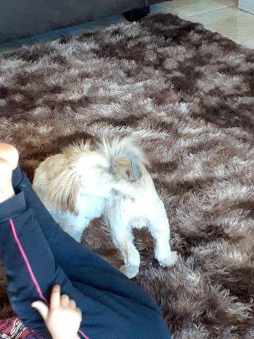 Vendo filhote de cachorro - Foto 4