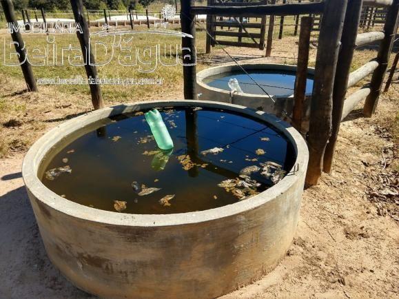 Fazenda Pecuaria 322 Hectares Plana - Foto 3
