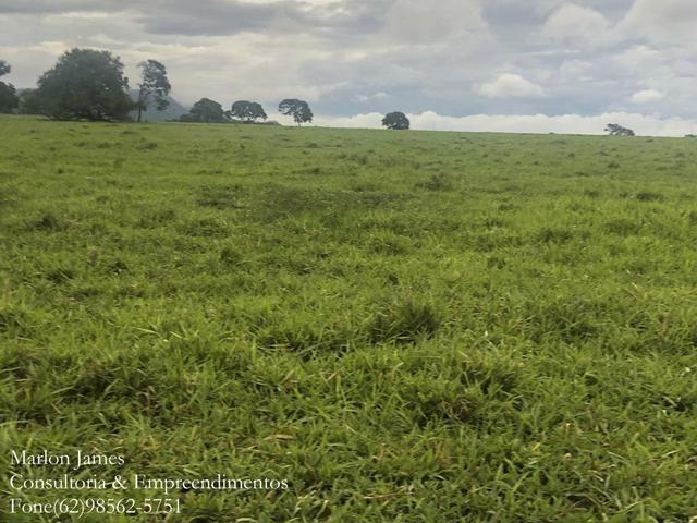 Fazenda em Vila Propício-Go! - Foto 7