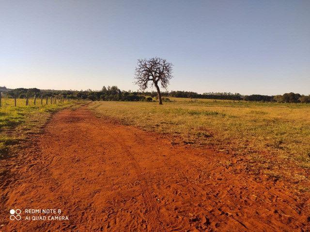 Área de 30 hectares saída São Paulo Próximo da BR 163 - Foto 8