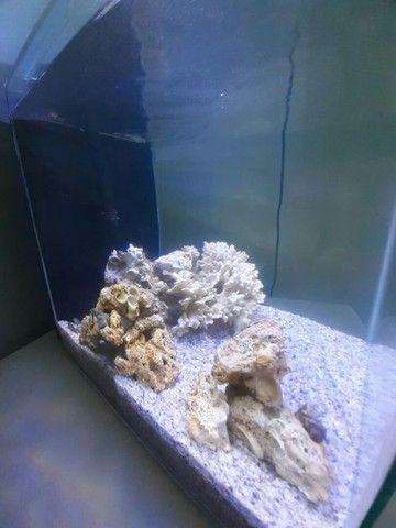 Aquario marinho cubo 30x30x30 - Foto 4