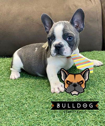 Bulldog frances cinza macho - Foto 3