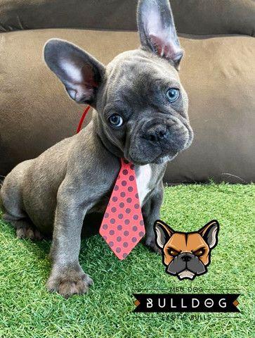 Bulldog frances macho - Foto 2