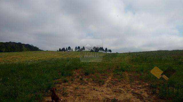 Chácara à venda em Zona rural, Contenda cod:219-16 - Foto 15