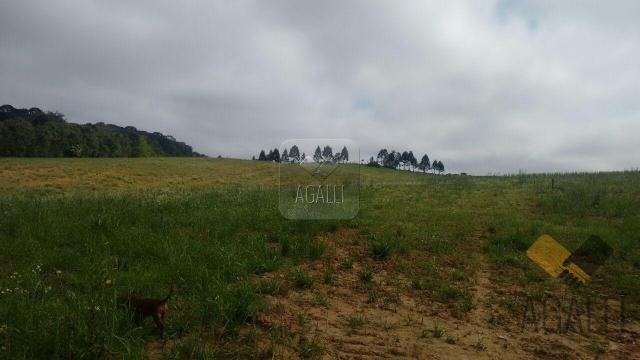Chácara à venda em Zona rural, Contenda cod:219-16 - Foto 11