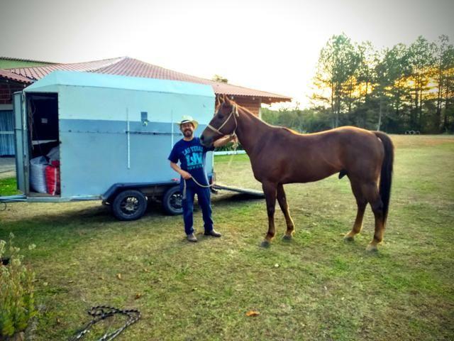 Carretinha para 01 cavalo - Foto 5