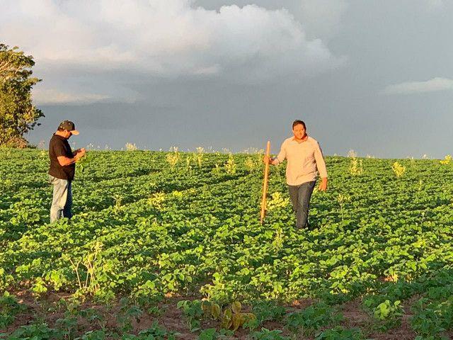 Arrendamento Fazendas PR Ms e Mt - Foto 4