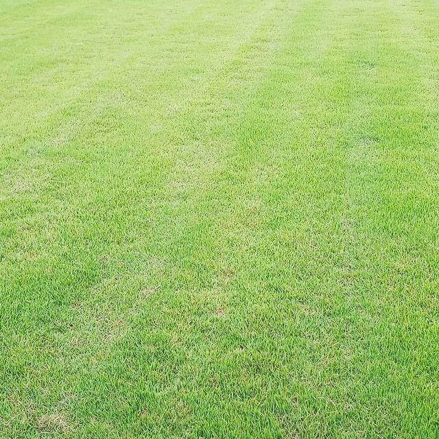 André Gramas qualidade para o seu jardim  - Foto 3