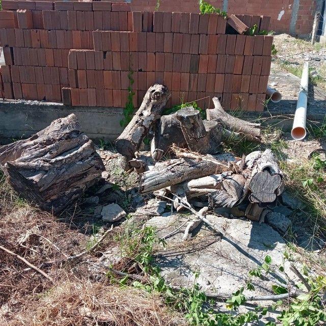 Vendo tronco de árvore para restaurante a lenha ou artesão