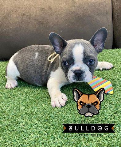 Bulldog frances cinza macho - Foto 2