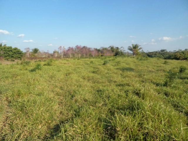 A renda pastagem para 150 vaca em Xapuri atenção numero do dono 9 99683914