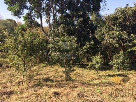 Terreno à venda em Centro, Colombo cod:300-17 - Foto 5