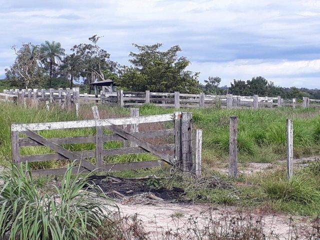 Fazenda Paraiso - Foto 11