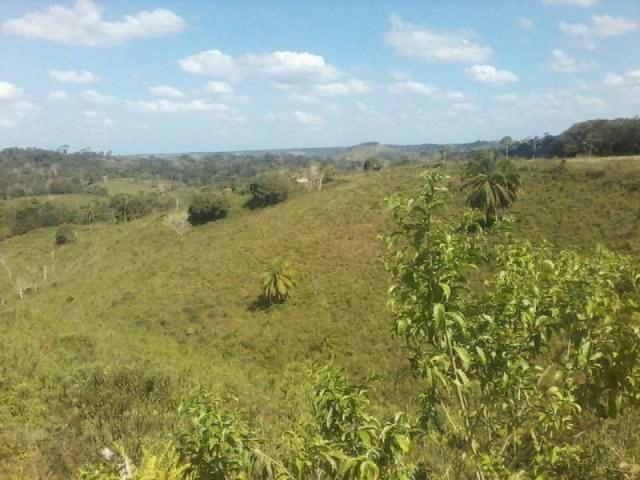 Fazenda de cacau no sul da bahia. mascote - camacã - itabuna - Foto 20