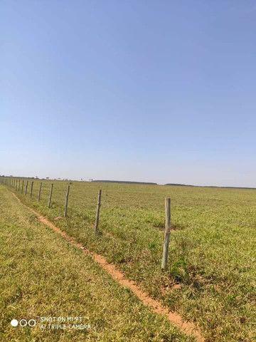 Arrendamento Fazendas PR Ms e Mt - Foto 5