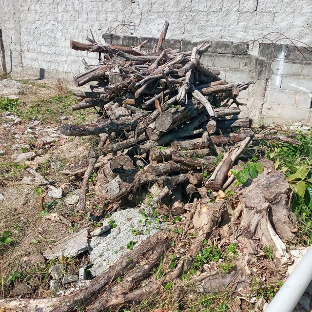 Vendo tronco de árvore para restaurante a lenha ou artesão  - Foto 4