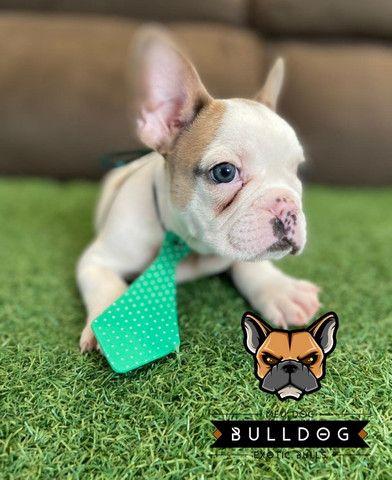 Bulldog frances - Foto 3