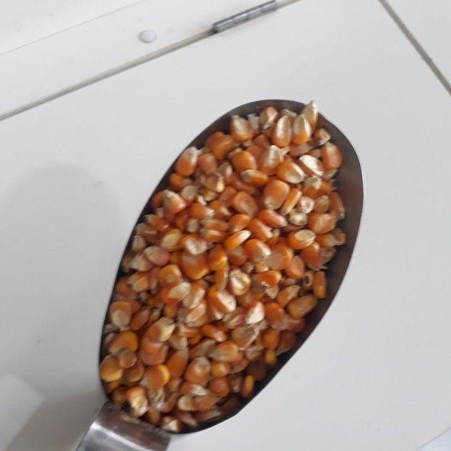 Milho 25kg - Foto 2