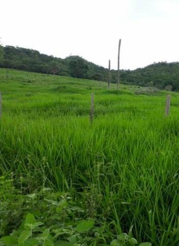Oportunidade Fazenda Vale Do Prata - Foto 2
