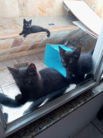 4 fêmeas filhote para doação - Foto 5