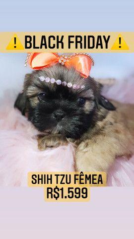 Black friday!! Shih Tzu fêmea lindíssima R$1.599 - Foto 4